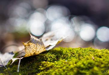 Leaf by Lasiu7