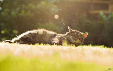 Cat in rays by Lasiu7