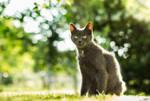 Sunny Cat #2