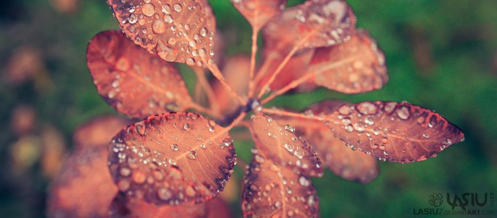 Autumn #2 by Lasiu7