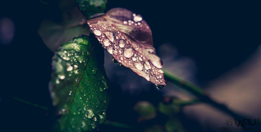 Autumn #7 by Lasiu7