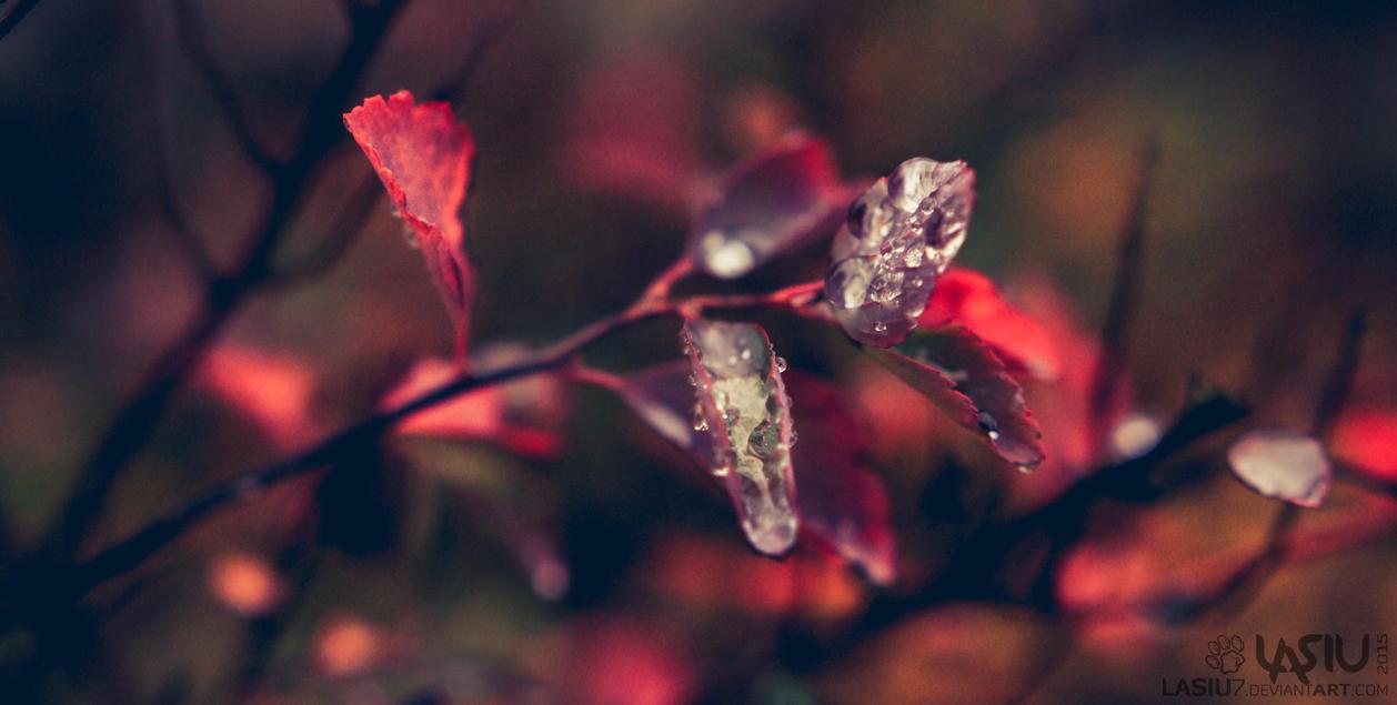 Autumn #8 by Lasiu7