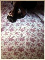 Upside down by ohohtokyo