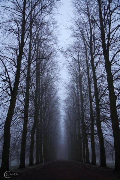 Creepy Avenue by CamPhoto