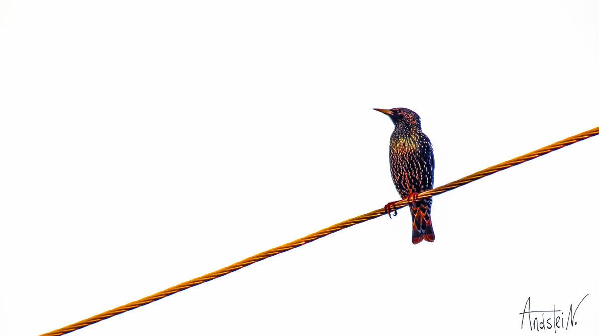 Bird. by Andstein00