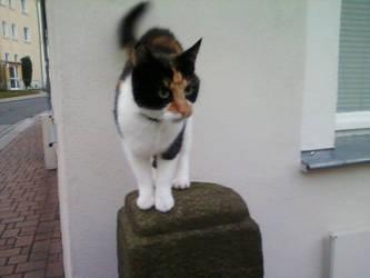 cat by Gepardenkralle