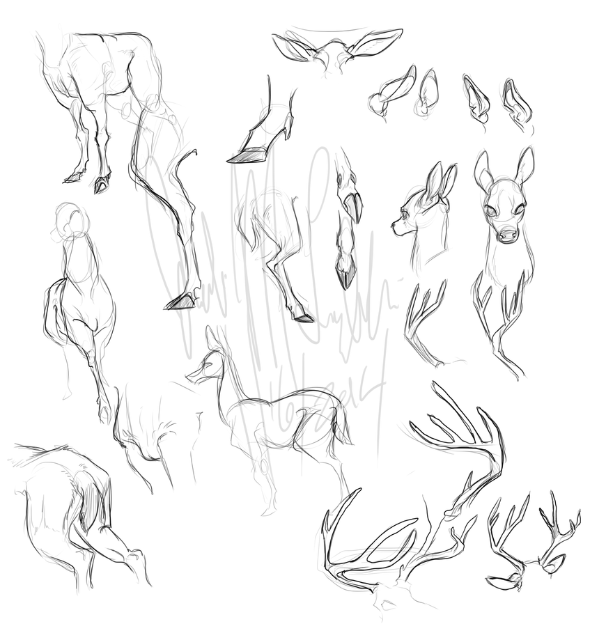 how to draw bambi head