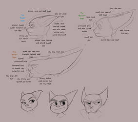 Lombax Head Shape Analysis by Wolf-Shadow77