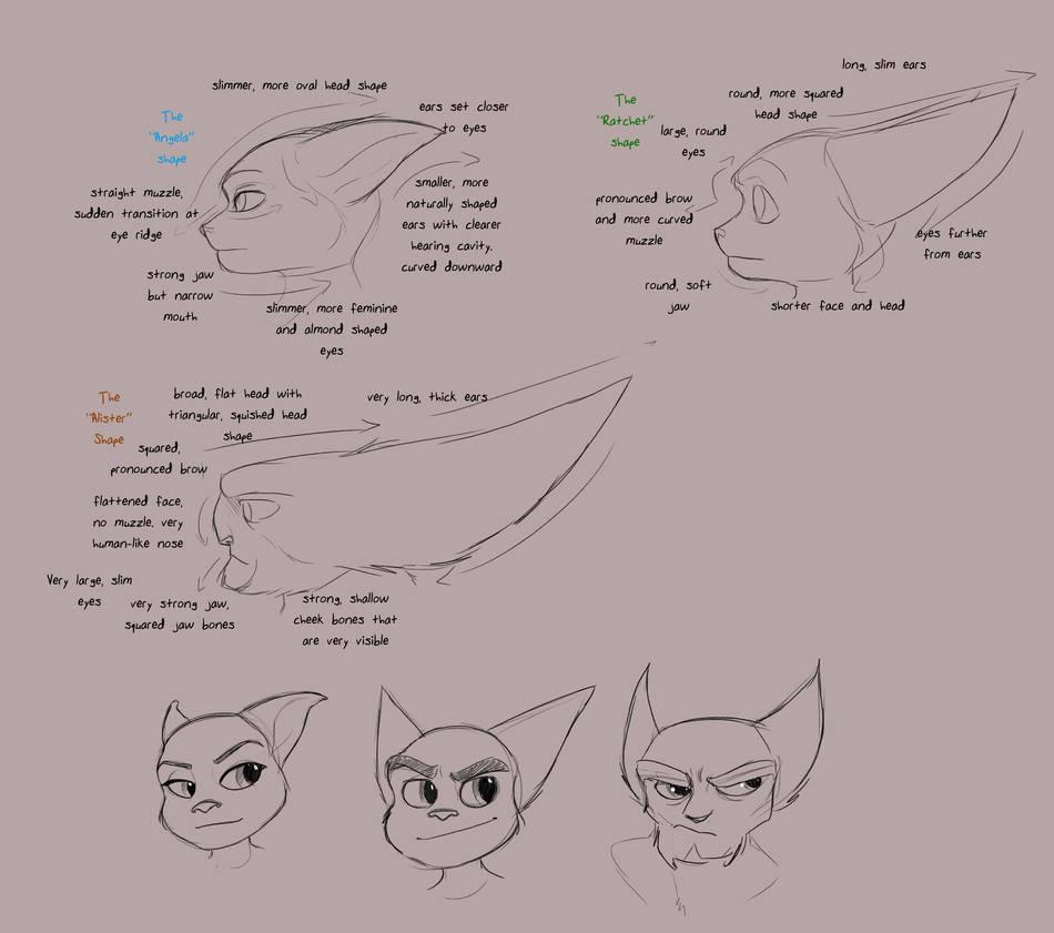 Lombax Head Shape Analysis by Wolf-Shadow77