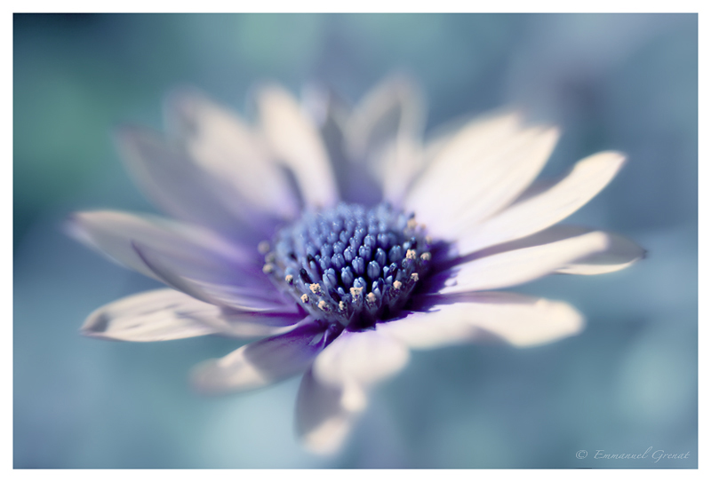 Plavo kao ... - Page 3 Flower_in_Blue_by_Yeoman2b