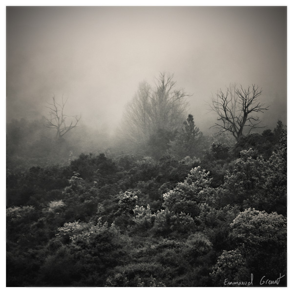 Mist by Yeoman2b