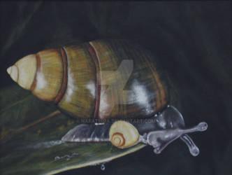 Snail by narathira