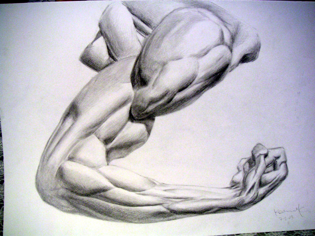 Arm Muscle Study by koanne on DeviantArt Arm Muscles Drawing