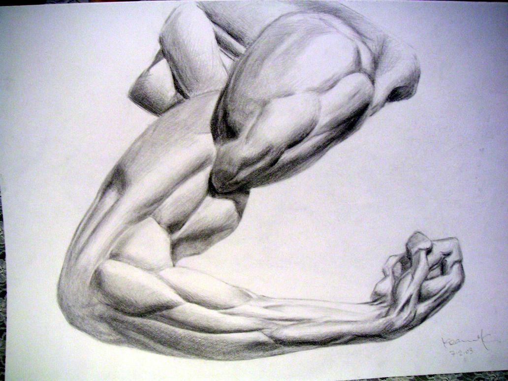 Arm Muscle Study by koanne