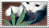 Stamp- Cat and weed