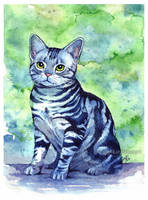 Study of a cat by anrasmus