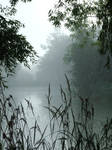 Foggy Pond 8