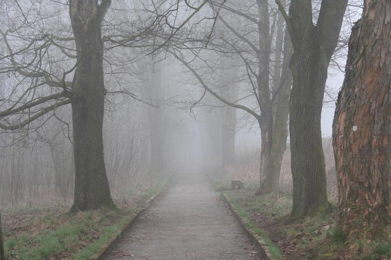 Misty Morning 7 by pelleron-stock