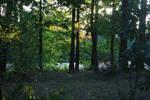 Autumn Park 1 by pelleron-stock