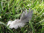 feather by Clergna