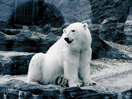 polar bear 002 by Clergna