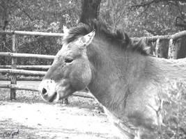 pony by Clergna