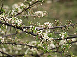 spring by Clergna