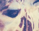 giraffe's eye by Clergna