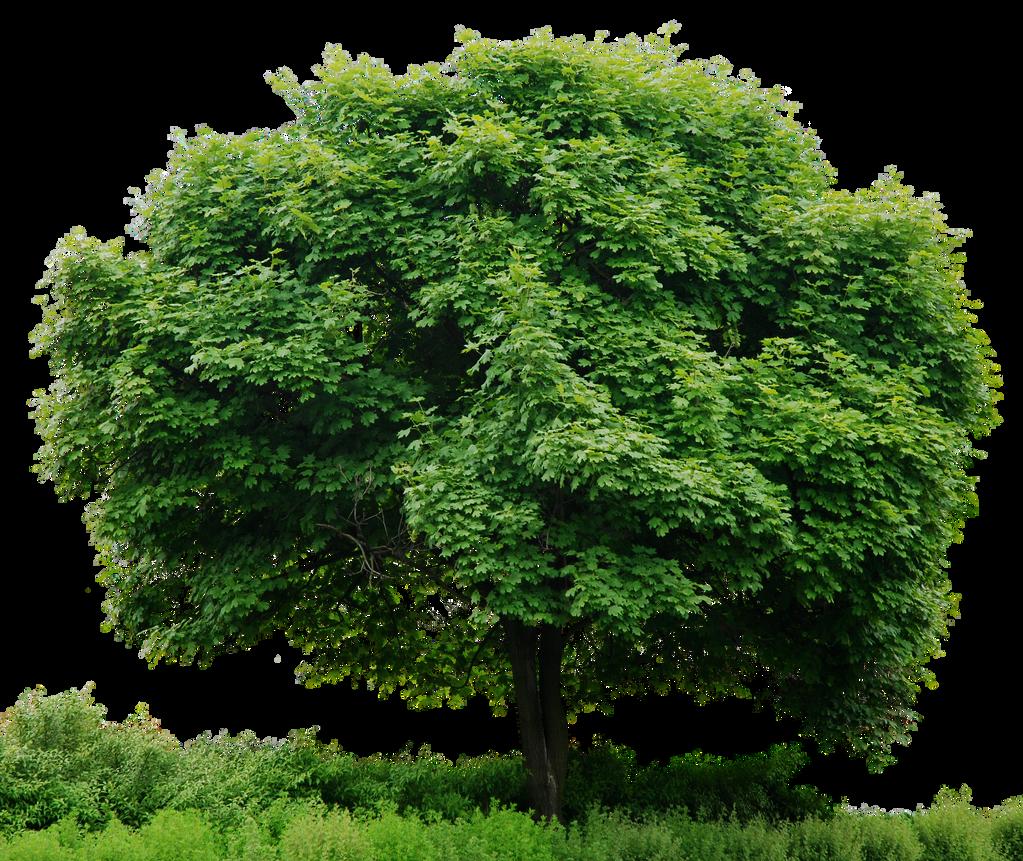 HD Tree Full Render by 3FixR on DeviantArt