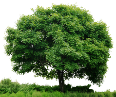 HD Tree Full Render by 3FixR