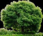 HD Tree Full Render