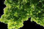 HD Tree Leaves Render