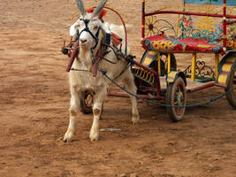 Goat and Carriage