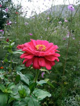 Lone Flower II