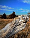 Great Plains Ratsnake crop