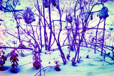 Snow Infrared