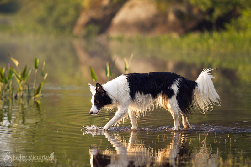 Reflection by ShelleyVPhoto