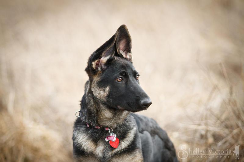 Bella by ShelleyVPhoto