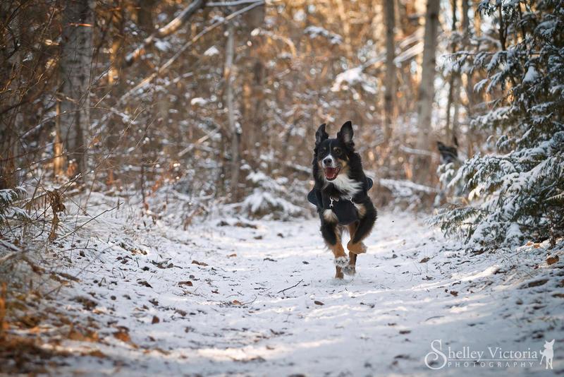 Winter Wonderland by ShelleyVPhoto