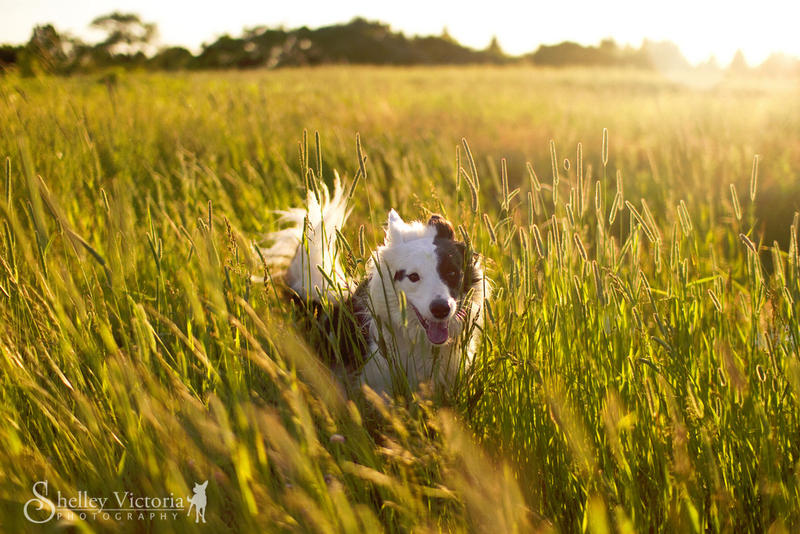Golden by ShelleyVPhoto