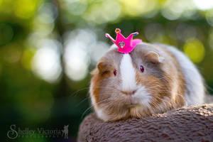 Princess Twix by ShelleyVPhoto