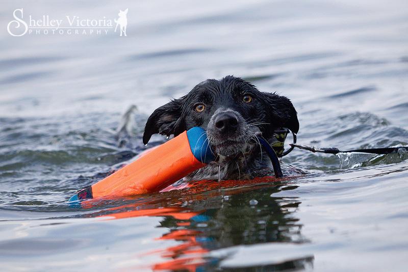 Sniper's first swim by ShelleyVPhoto