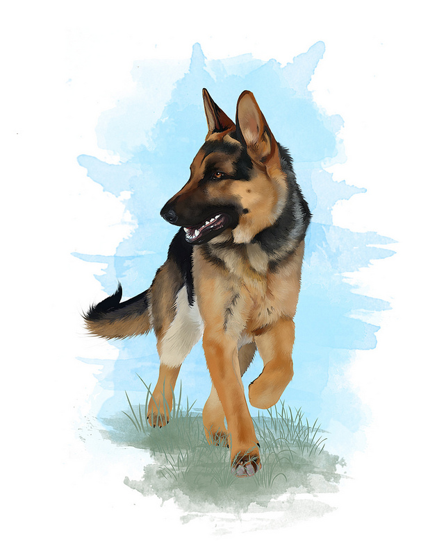 German shepherd trot by shelleyvphoto on deviantart