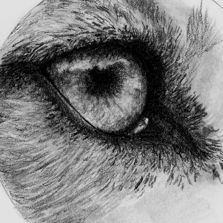 Wolf Eye Drawing In Pencil