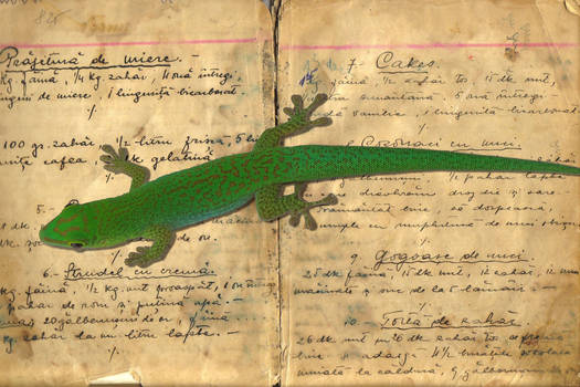 Gecko In The Cooking Book
