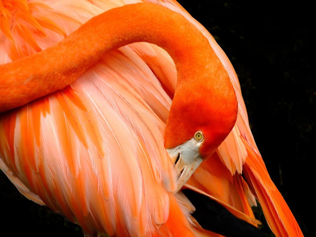 The Flamingo by RickDavis1