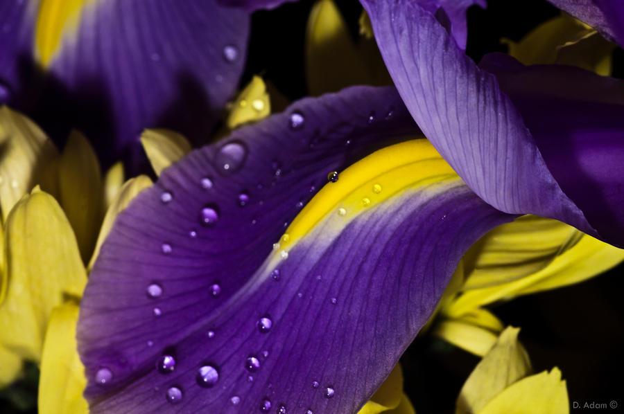 Violet tears by Malarkeys