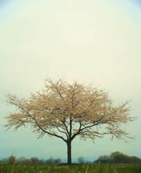 Spring Love by Lostlainelove