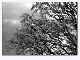 White snow and Black tree by YvesDesign