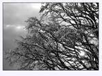 White snow and Black tree